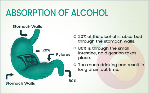 Alcohol Digestion - Absorption of Alcohol